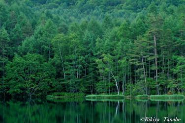 「緑響く」 長野県・茅野市