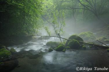 「幽玄の誘い」 栃木県・塩谷町
