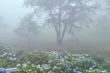 「夢の中に・・・」 埼玉県・美の山公園