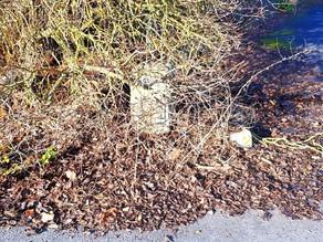 Der Stein im Busch