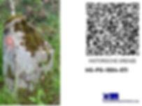 HG-PG-1804-071.jpg