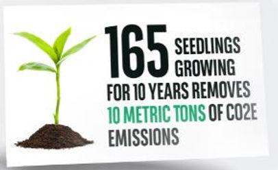 8 Solution Growing stuff.JPG