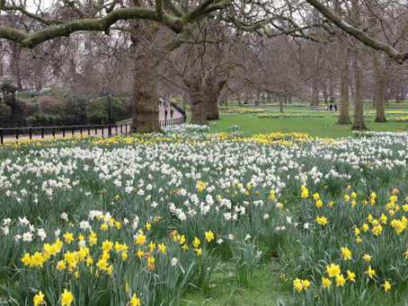 Green Park, Buckingham Palace, Houses of Parliament