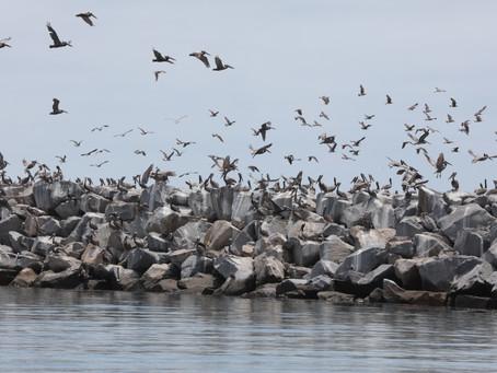 Birds of Dana Point
