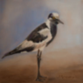 African Shore Bird - Oil on Canvas 8x8.j