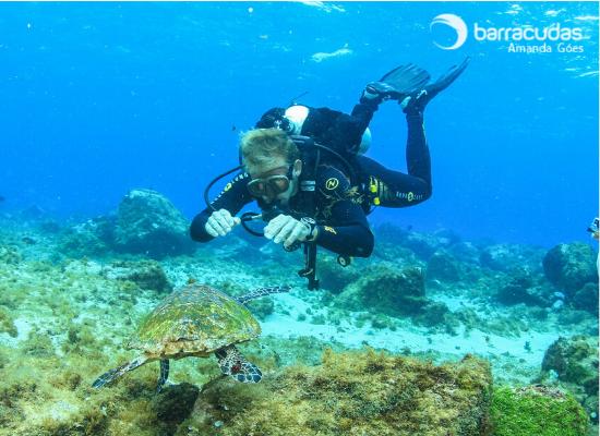 Fotografia de um mergulhador paira na coluna d'água próximo ao fundo em frente a uma tartaruga de pente
