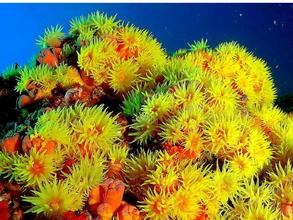 O coral-sol: um astro invasor