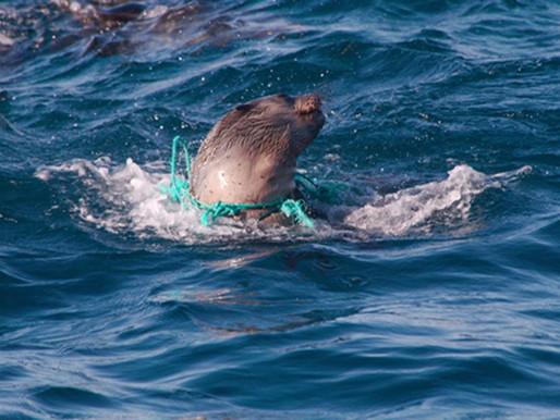 Principais impactos antrópicos no ambiente marinho