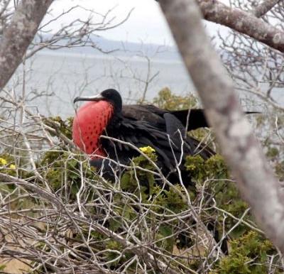 Aves marinhas: o que são e quais são?