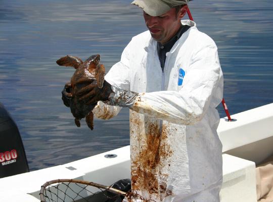 A imagem mostra um veterinário dentro de uma embarcação segurando uma tartaruga marinha toda suja de óleo. Ao fundo vemos o mar.