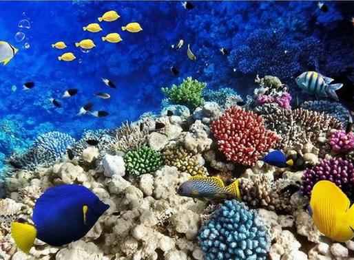 Espécies exóticas invasoras: uma ameaça aos ecossistemas marinhos