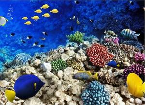 Imagem de um recife de coral contendo diversos organismos cnidários e várias espécies de peixes.