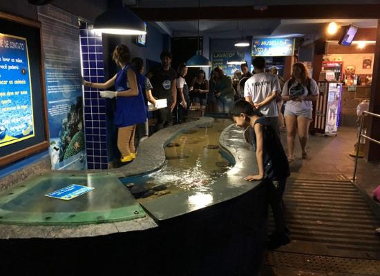 """A foto nos mostra um tanque de contato no Aquário de Ubatuba. O tanque é longo, em formato de """"S"""" e é baixo, facilitando o manuseio dos animais. De um lado, mediadores do Aquário, de outro, os visitantes. Os visitantes possuem a liberdade de manusear os animais. O ambiente se encontra em um ambiente fechado, bem iluminado e diversas pessoas estão próximas à superfície do tanque."""
