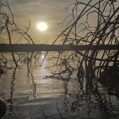 Fotografia do por do sol em um rio durante a maré cheia, nela pode-se observar algumas raízes de mangue (Rhizophora).