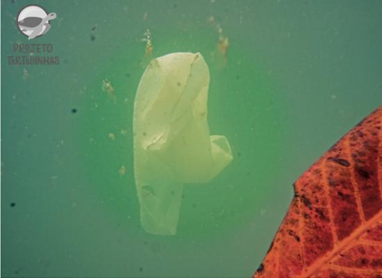 Fundo marinho, de água em tom esverdeado, uma sacola branca flutua ao lado de uma folha.