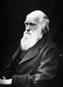 Foto em preto e branco de Charles Darwin em meio corpo. É um homem branco, mais velho, com careca e cabelos brancos apenas na parte posterior da cabeça. Possui barba grande, lisa, que vai até o início de seu tórax. Seu olhar está voltado para a lateral esquerda. Veste um terno preto.
