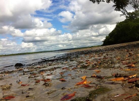 Foto da margem de um estuário onde podemos ver folhas no sedimento e algumas algas esverdeadas. Mais acima e um pouco à esquerda, veem-se as águas do Canal de Santa Cruz.