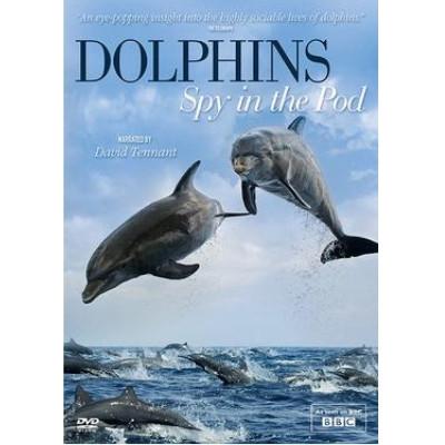 Foto do documentário Dophins, spy in the pod mostrando dois golfinhos no ar e vários outros nadando no mar na parte inferior.