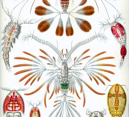 Copépodes: a fauna dominante do plâncton marinho tropical