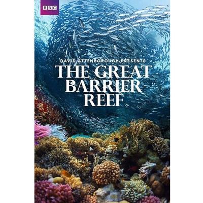 Foto do documentário The Great Barrier Reef mostrando o fundo do oceano com um cardume de peixes na parte superior e um recife de coral na inferior.