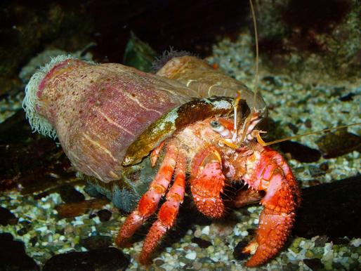 Interações simbióticas e como elas ocorrem no mar