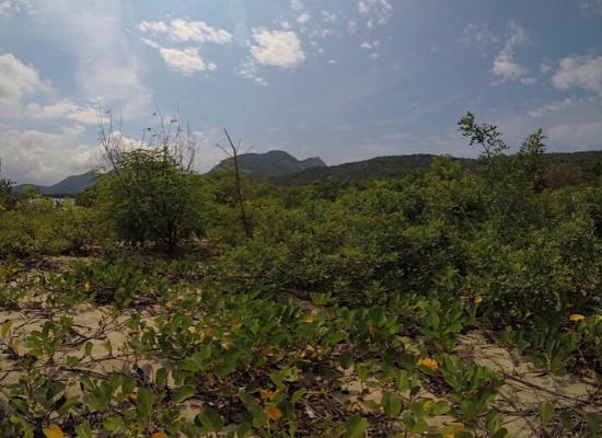 Em primeiro plano, uma vegetação rasteira denominada de restinga sob uma faixa de areia. Ao fundo, pode-se observar montanhas e o céu azul.