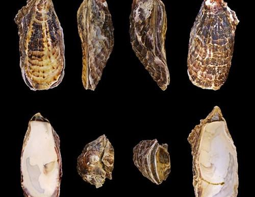 Como os seres marinhos podem nos fornecer informações relevantes sobre o mar