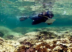 Foto de uma pessoa com trajes de mergulhador, no mar aberto, segurando uma prancheta para anotações. Embaixo dela há um recife de corais, com cores que variam de branco a marrom.