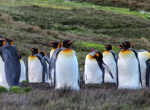 Pinguins voadores? Um passado evolutivo interessante