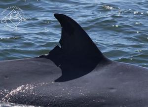 Imagem semelhante a de cima, porém é possível observar uma parte maior do dorso do animal.