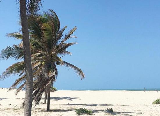 A foto mostra a praia no primeiro plano com algumas palmeiras e poucos arbustos nas dunas, ao fundo se encontra o mar encontrando com o ceu azul. O dia esta ensolarado e por isso vemos sombras das palmeiras na areia.