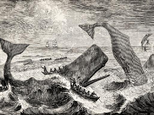 Baleias e seres humanos: o progresso entre nossas interações