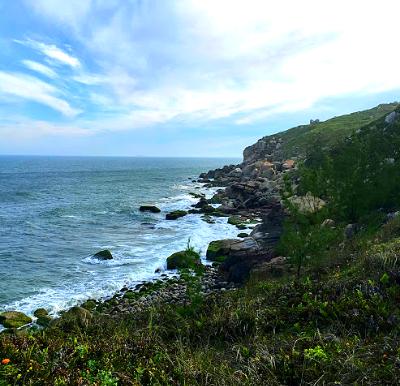 Restinga: a vegetação do litoral