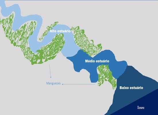 Esquema ilustrado de um estuário e suas subdivisões de acordo com o grau de mistura. O baixo estuário está logo abaixo, próximo ao oceano, o médio estuário mais acima e o alto estuário, bem acima. Manchas verdes representam os manguezais. Espécies eurihalinas são encontradas nos três tipos, já espécies estenohalinas são associadas a somente um tipo.