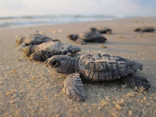 Armadilhas no mar: a morte incidental de animais marinhos