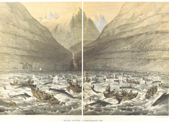 A imagem representa gravura de 1854, onde o cenário é composto por duas montanhas, uma à esquerda e outra à direita, que formam um vale inundado por água. Nesse vale, a pintura evidencia a abundância de barcos a remo com homens à bordo caçando uma grande quantidade de baleias com arpão. O cenário em volta é composto por mais montanhas.