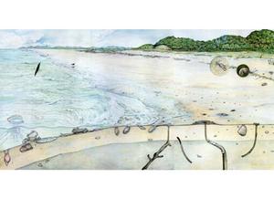 Ilustração de uma praia, mostrando alguns pequenos animais enterrados próximos à superfície da areia, ou em túneis. Outros animais estão na água.