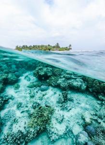Imagem do oceano, sendo a parte inferior mostra o branqueamento dos corais e ao fundo uma ilha com vegetação.