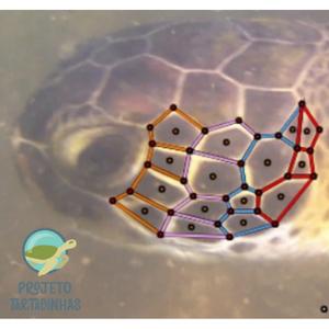 Fotografia do lado esquerdo da cabeça de uma tartaruga marinha com linhas coloridas delimitando as placas da cabeça, desenhadas.