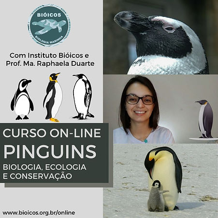 Curso On-line Pinguins.jpg