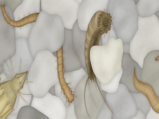 Entre os grãos de areia da praia: a dinâmica do ambiente intersticial