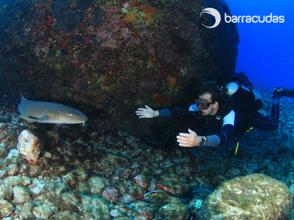 Veja, ouça e sinta como os organismos aquáticos! Como a água afeta os sentidos durante o mergulho?