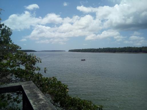 Adaptações dos animais aquáticos à vida nos estuários e manguezais