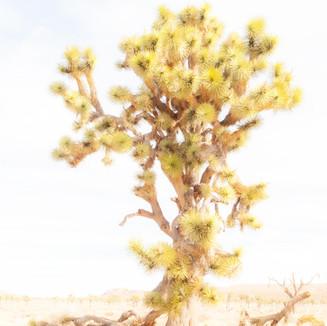 Deserts Yellow Ikebana