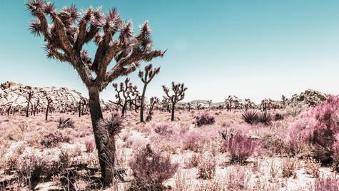 Pink Desert