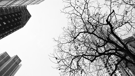 City Tree B&W
