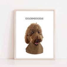 Goldendoodle Dog Illustration