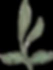 Singular Leaf_7.png