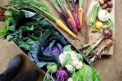 季節のおまかせ野菜セットM【オーガニック・固定種】送料込み