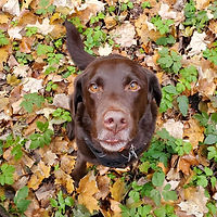 Clio with fall leaves.jpg